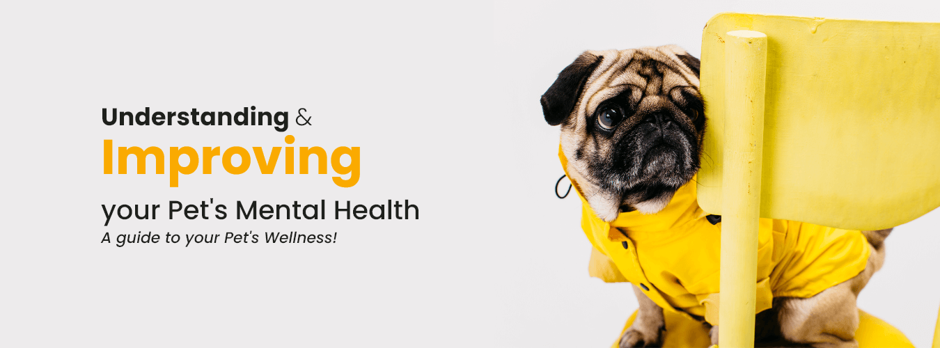 understanding & improving your pets mental health