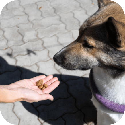 Treatment of social anxiety in dogs