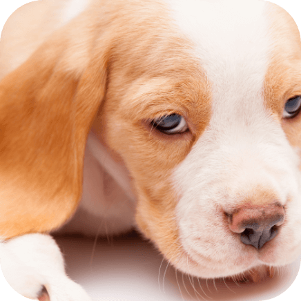 Symptoms of social anxiety in dogs
