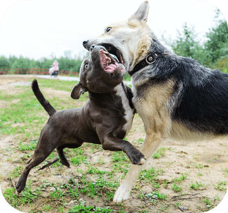 Causes of social anxiety in dogs