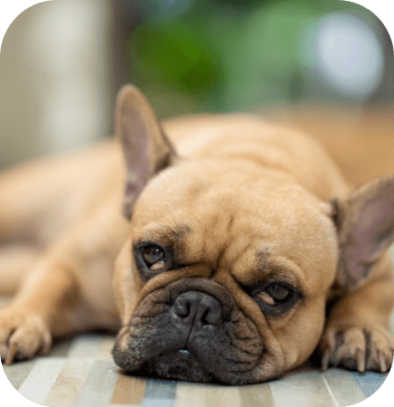 Prevention of noise anxiety in dogs