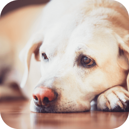 Symptoms of age-related anxiety in dogs