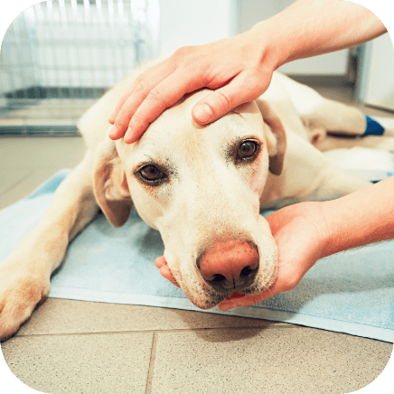 Causes of age-related anxiety in dogs
