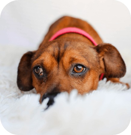 Symptoms of fear-based anxiety in dogs