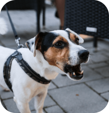 Causes of fear-based anxiety in dogs