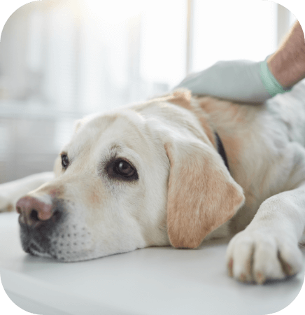 PTSD and Your Pet's Mental Health
