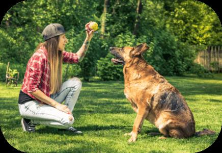 pet-mental-health